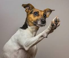 Dog Extending Right Paw