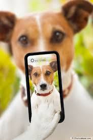 Dog with Cellphoto Photo
