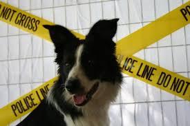 Dog in Front of PoliceTape