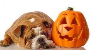 Dog and Pumpkin