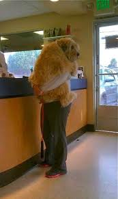 Large fearful dog in owners arms at vet office