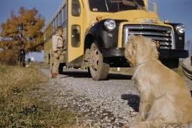 Dog Watching School Bus