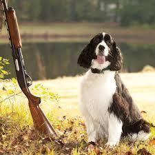 Dog next to rifle