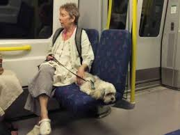 Woman and dog on train
