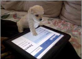 Puppy using iPad