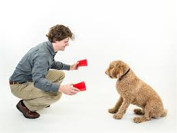 Dognition test of treat hidden for dogs in cups