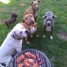 Dogs At A Barbecue