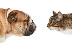 Dog v. Cat
