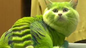 Dragon Cat