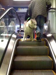 Dog on EscalatorDog