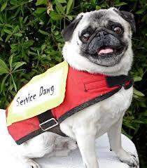 Fake Service Dog