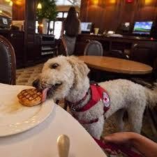 Misbehaving dog wearing fake service vest