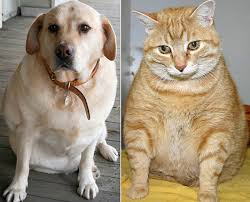 Overweight Dog and Cat