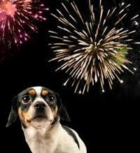 Dog Frightened of Fireworks
