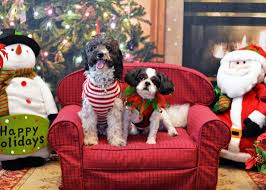 Foster Dogs at Christmas