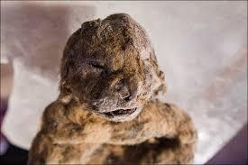 12,000 Year-Old-Dog