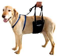 Ginger Lead on Dog
