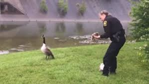 Goose with Police