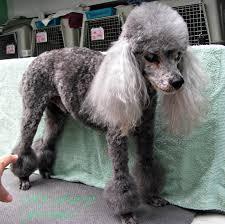 Groomed Old Dog