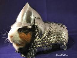 Guinea Pig Helmet