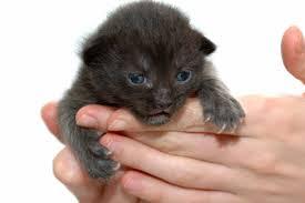 Handling Kitten