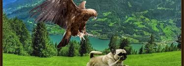 Hawk Chasing Dog