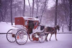 New York City Horse Carriage