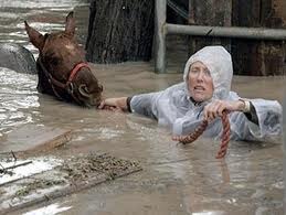 Person and horse swimming in flood