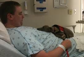 Dog on hospital bed with person