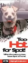 Too Hot For Spot Poster