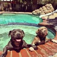 Hot Tubbing Dogs