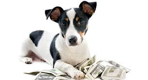 Dog with Money
