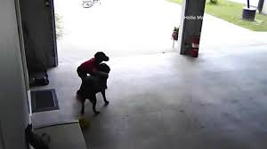 Child Sneaking a Dog Hug