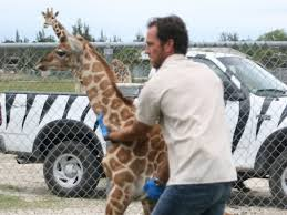 Jeremy Brandt with giraffe