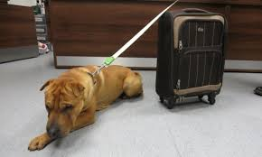 Kai with suitcase