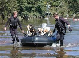 Katrina Dog Rescue