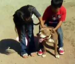 Kids with Pitbull in question