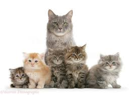 Mom with Kittens