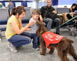 Pups being petted at LAX