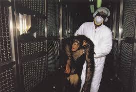 Lab Chimp