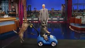 Dogs doing tricks on the Letterman Show
