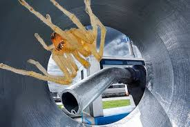 Spider in gas tank