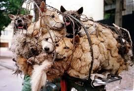 Meat Festival Dogs