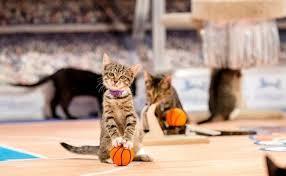 Meow Madness Kitten Basketball Championship