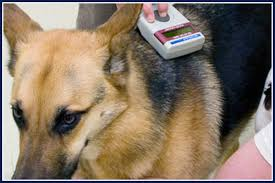 Microchip Scan