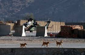 Dogs on Military Base