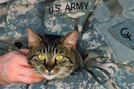 Military man with Cat