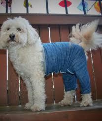 Mozzie Wearing Mozzie's Pants