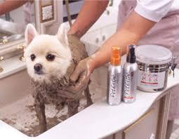 Dog Receiving Mud Bath
