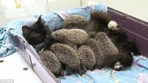 Muska with Hedgehogs